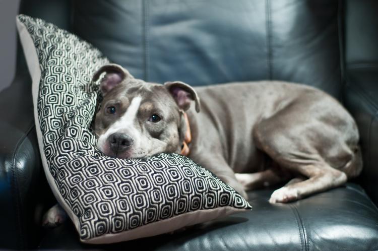 10 tips para mantener fresca a tu mascota en verano